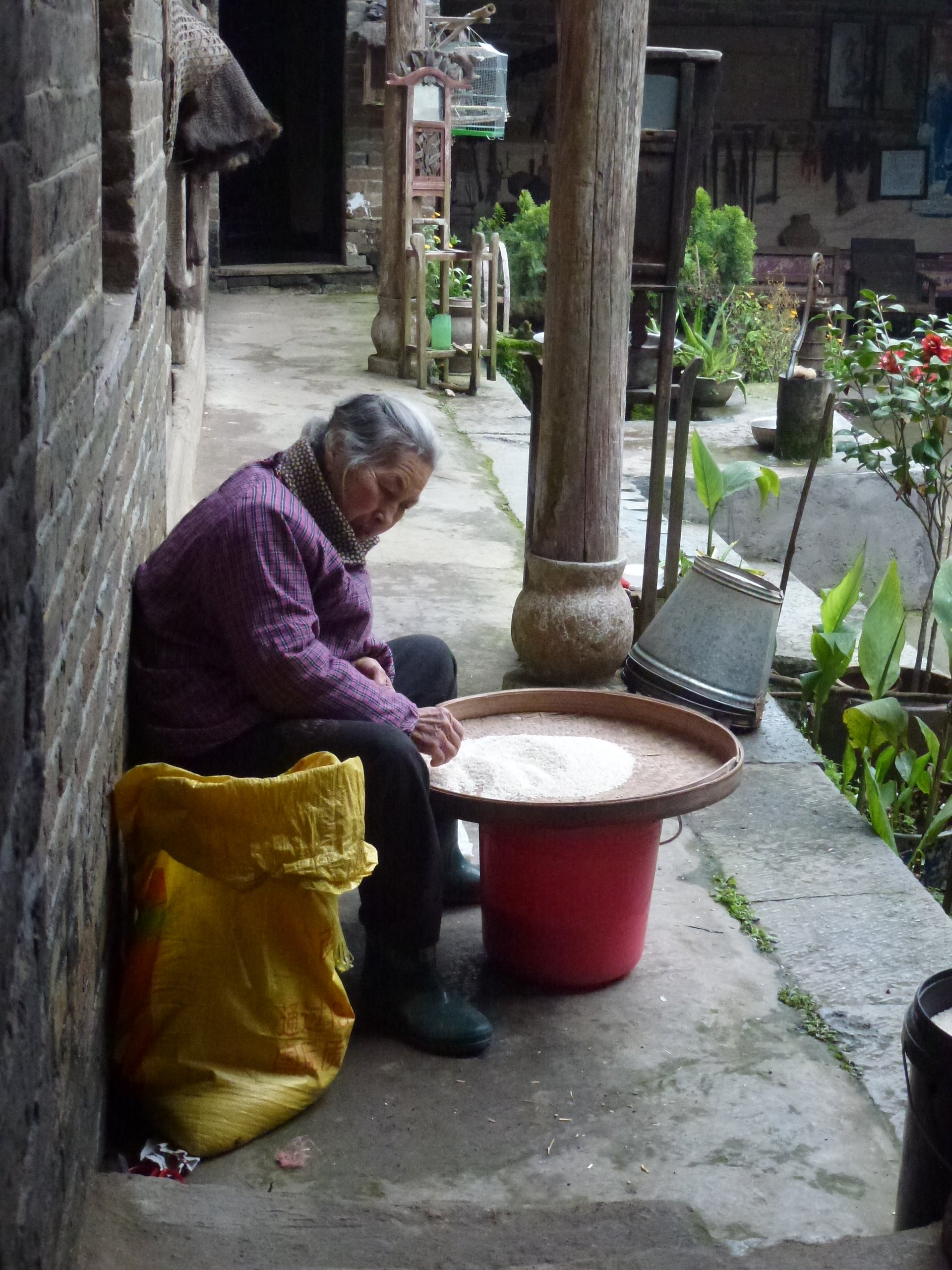 Old lady sorting rice